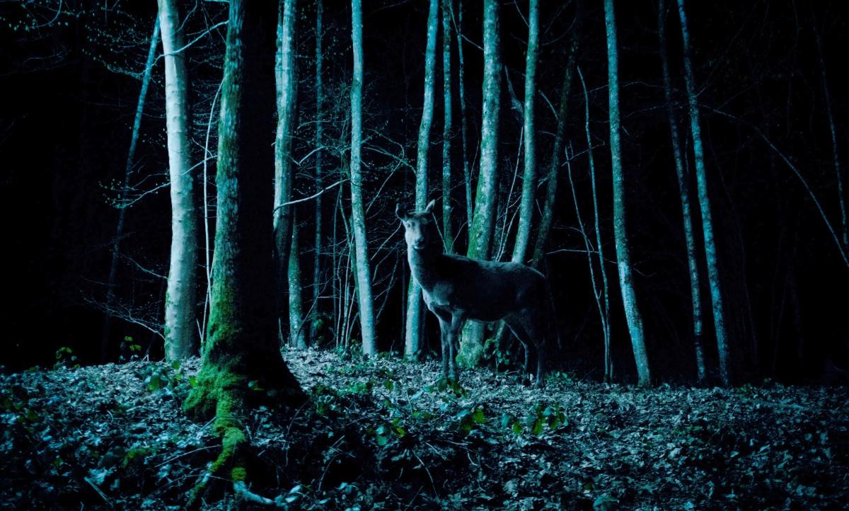 Die Tiere aus dem Wald, die ich rief (Foto: Pandastorm Pictures)